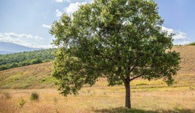 Alberi e natura - Aboca